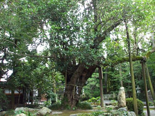少林寺のギンモクセイ