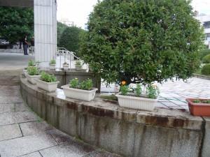 県庁花壇 2 画像 009