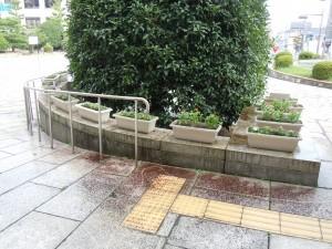 県庁花壇 3 画像 013